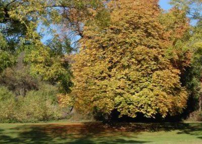 herbst-kastanienbaum