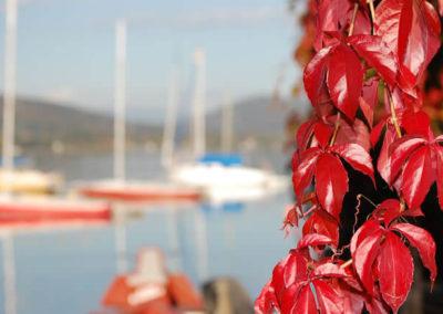 herbst-laub-segelboote